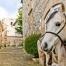 un dels nostres cavalls, davant la casa