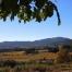 Vinyes desde Santa Maria de Foix, Tardor 2010