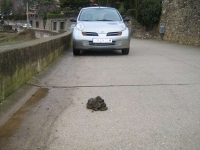 Borredà,  un pueblo sucio, muy sucio, y el Ayuntamiento lo tolera,  sinó mandaría limpiarlo.