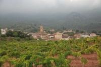 El poble des d'una vinya
