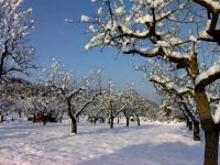 Camí del Molí nevat