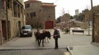 Passeig en burro