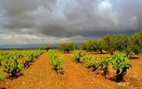 Vinyes i oliveres, Torrelletes.