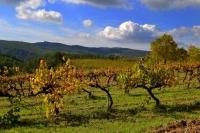 Vinyes de Pontons, dies de Tardor.