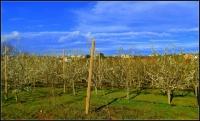 Camps de fruiters, Cal Sègol.