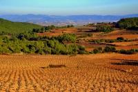 Vinyes de Can Grau, paisatge d'Hivern  de l'Alt Penedès.
