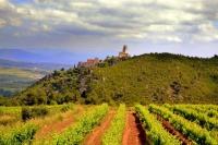 Castell de Subirats i vinyes.
