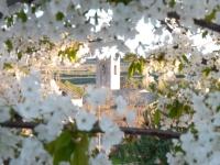 L'església de Sant Pau d'Ordal florida