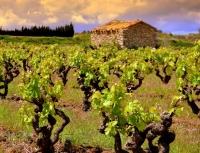 Vinyes i Prèssec de l'Ordal son alguns dels atractius de la capital de la vinya.