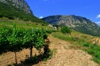 Les vinyes més altes d'Europa i l'ermita de Sant Joan de Montanissell.