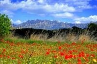 Vista primaveral de Montserrat des de Piera.