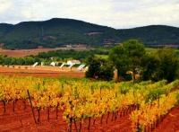 Vinyes de Santa Maria de Miralles a l'inici de la Tardor.