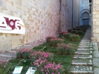 Girona Temps de Flors 2013
