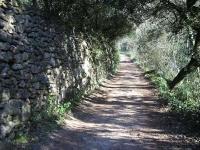 Mur de pedra seca al tram baix de la Riereta