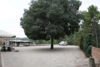 El lledoner majestuós enmig de l'era de davant del restaurant utilitzada com a aparcament.